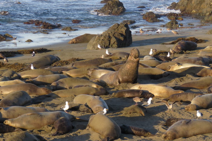 Big Sur Seals, Tidepools and Morro Bay By Kayak