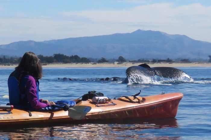 Whales and Wildlife by Kayak~ Moss Landing