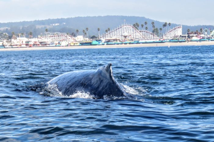 Whales and Wildlife Kayak to Brunch~Santa Cruz