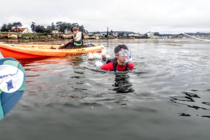 Adventure Paddle and Exploration of the Kelp Forest