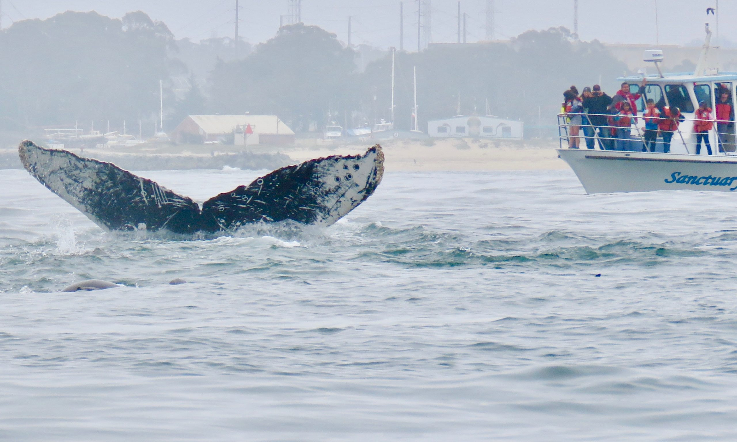 Whales and Wildlife Private Cruise for Women aboard Sanctuary Cruises