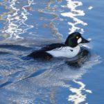 Elkhorn Slough birding tours -Blue Water Ventures