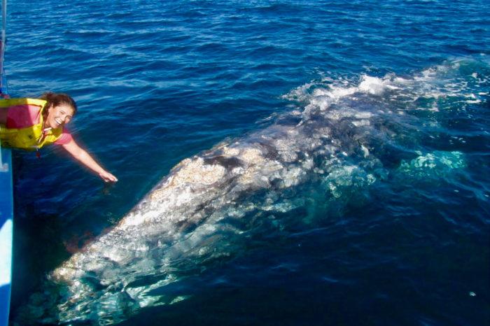 Baja Whale Camp ~Sea of Cortez Kayak/Snorkel February 2022