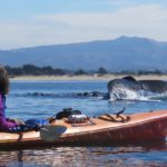 kayaking with whales - Blue Water Ventures