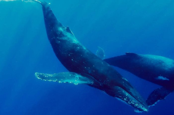 Whales and Wildlife Private Cruise for Women July 31st & Sept. 26th