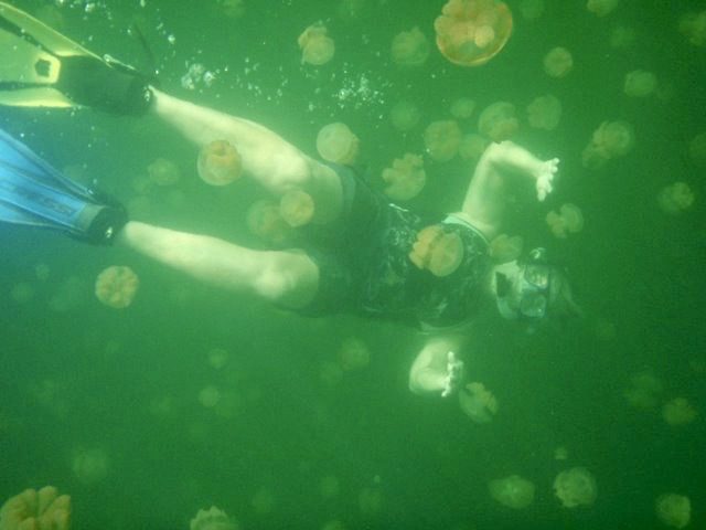 Jelly Bloom By Kayak~Monterey Bay