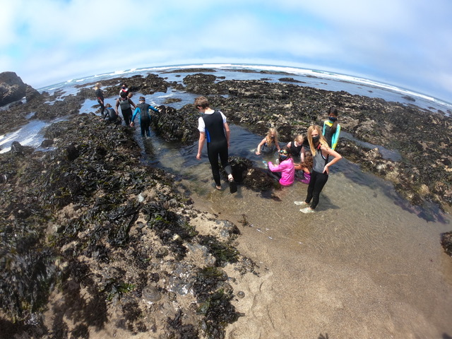 Extreme Tidepooling- Blue Water Ventures